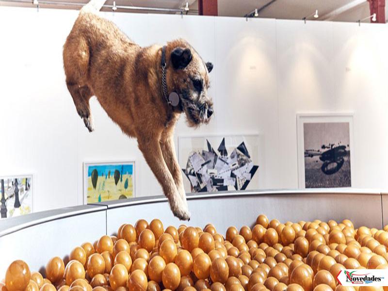 Resultado de imagen para Nueva York tendrá la primera exposición de arte para perros