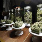 mariguana-medicinal1