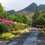 panama-el-cerro-pastoreo1
