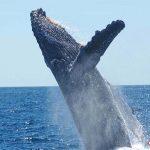 reto-de-la-ballena-azul-peligro-800