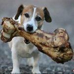 perro-con-hueso-de-sus-suenos1