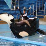 orca sea world1